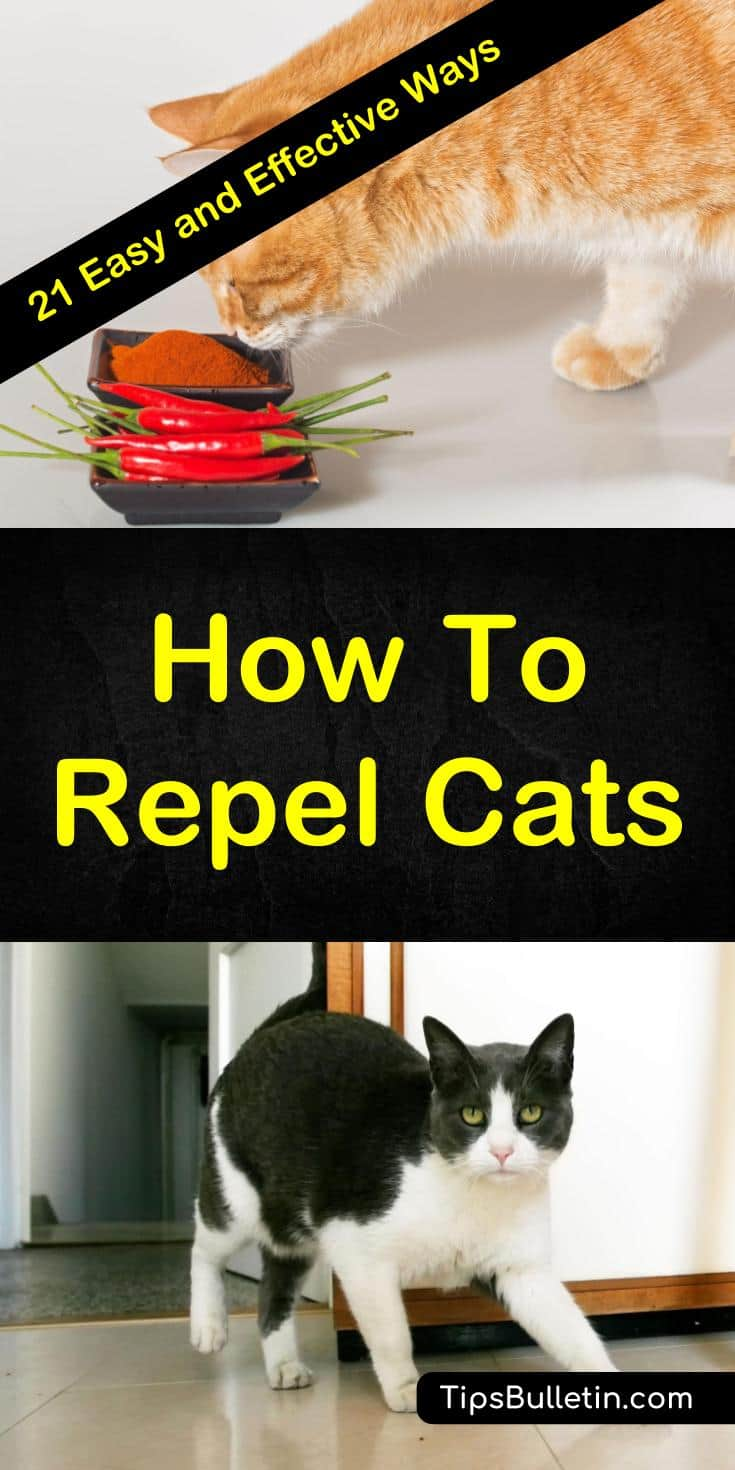 Discover 21 easy ways to repel cats and keep them from using your flower beds as their litter box. These natural, homemade remedies use ingredients like essential oils and herbs to keep cats from yard and gardens. Learn how to make homemade sprays with simple products from your home. #keepcatsout