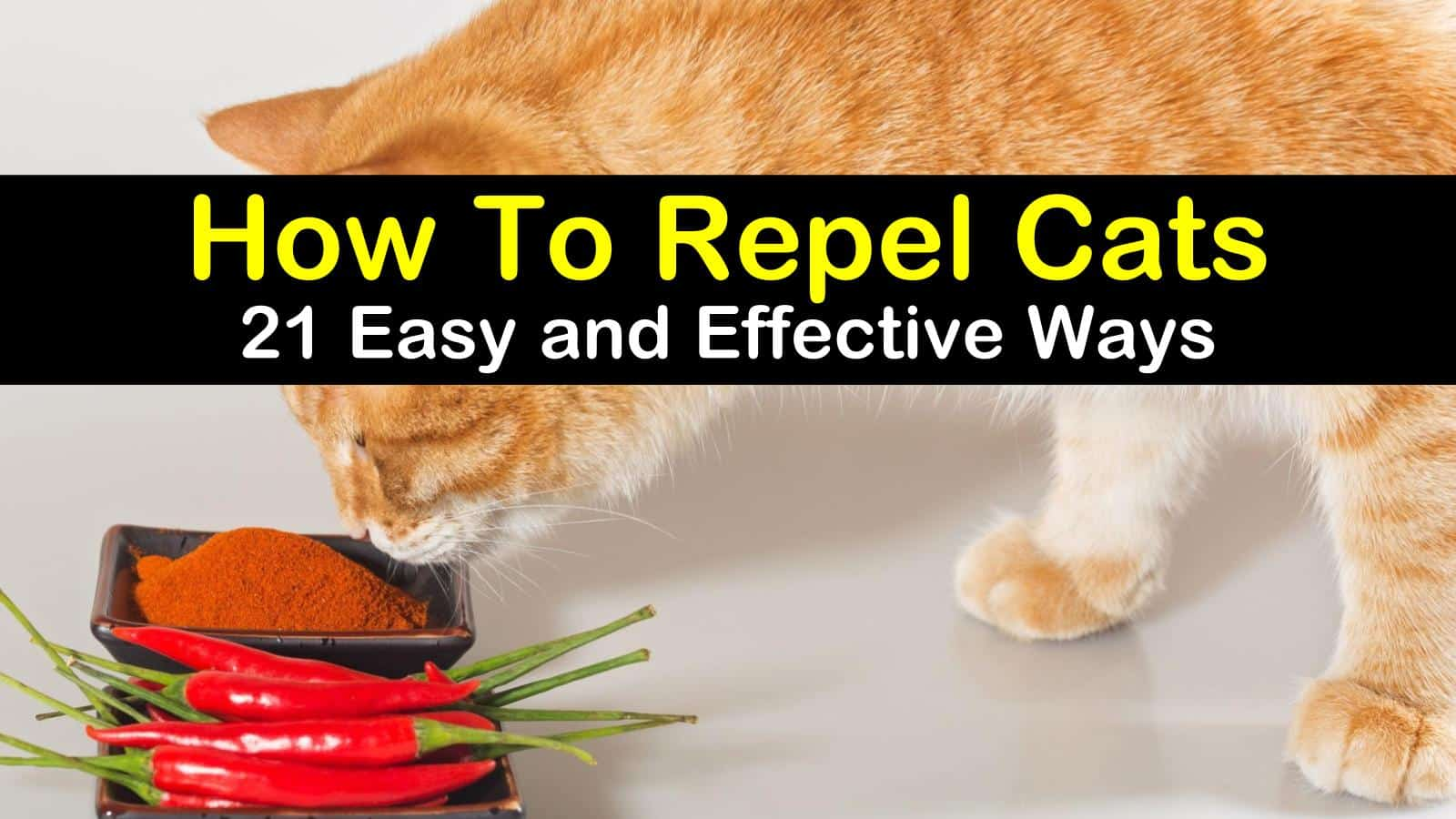 How To Repel Cats - 21 Easy and Effective Ways titlimg1