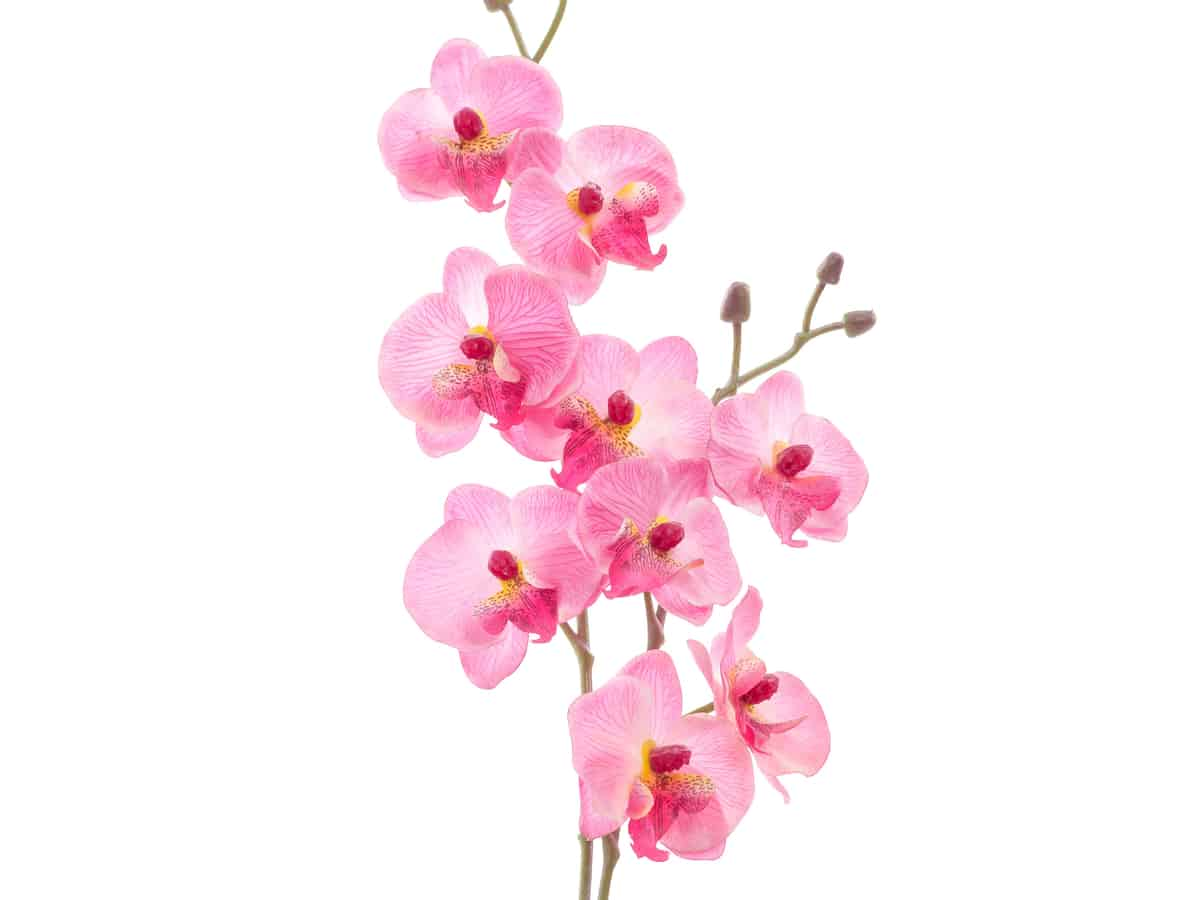 orchids are beautiful plants