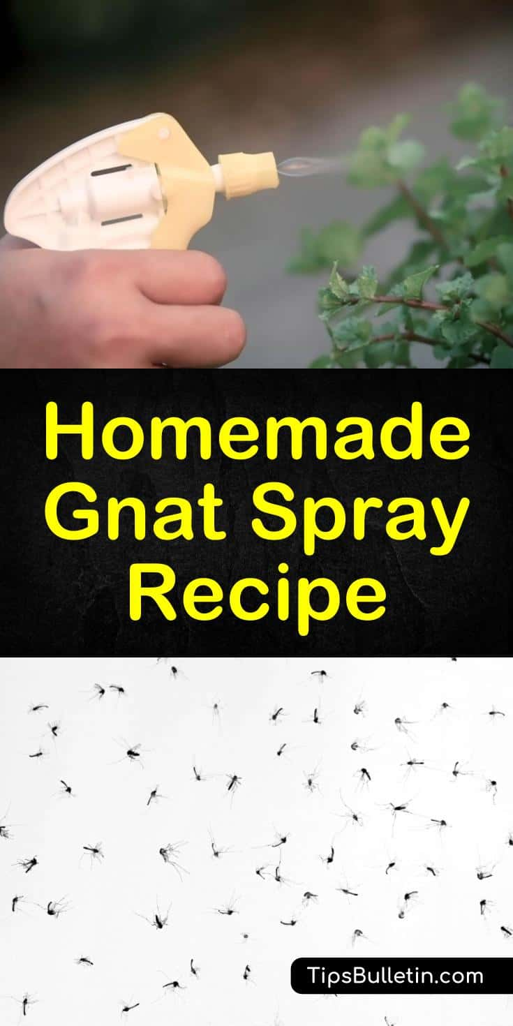 Learn how to deal with pesky gnats with a homemade insect repellent. This DIY natural pest control solution uses simple ingredients like apple cider vinegar and essential oils. #gnatspray #sprayforgnats #natrualgnatrepellent