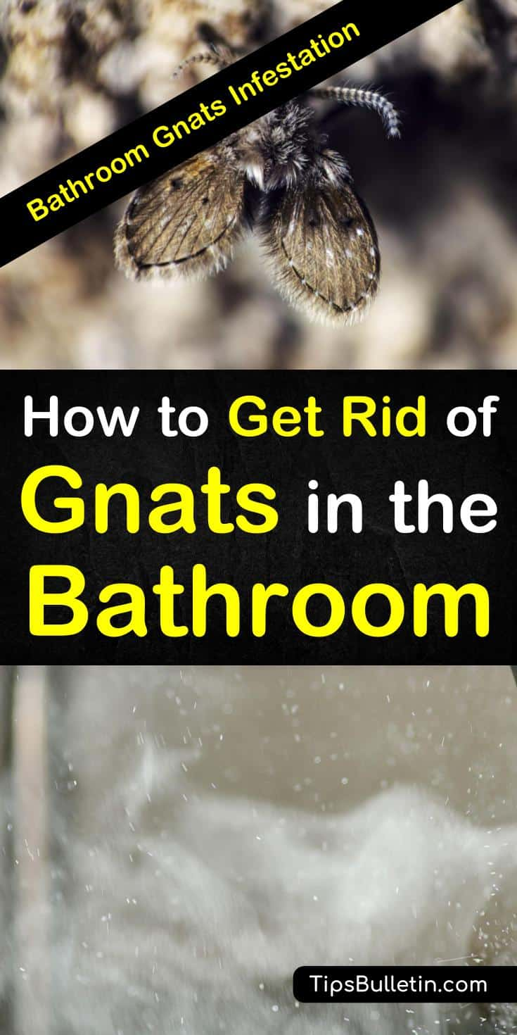 Bathroom Gnats Infestation - How to Get Rid of Gnats in ...