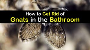 titleimg1 how to get rid of gnats in the bathroom