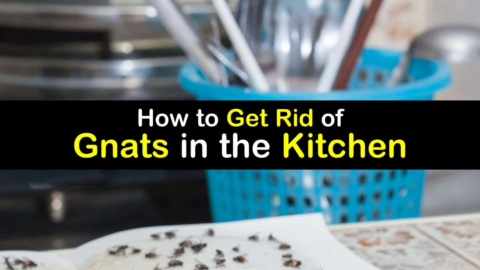 titleimg1 how to get rid of gnats in the kitchen
