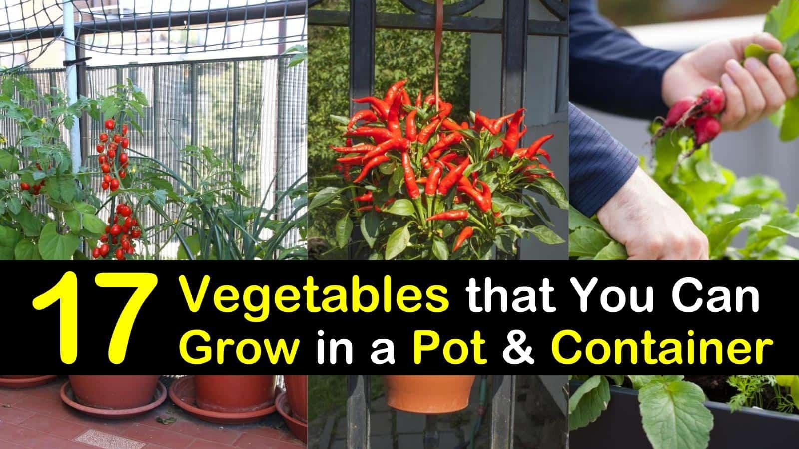 container vegetable gardening titleimg1
