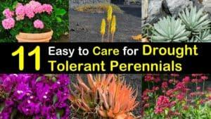 drought tolerant perennials titleimg1