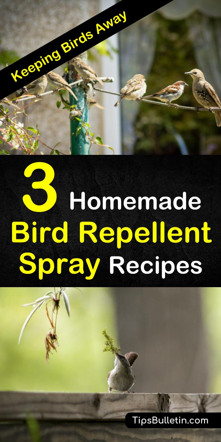 Learn how to make simple homemade bird repellent sprays with non-toxic, environmentally friendly products. These simple pest control methods will keep birds from eating your plants and destroying your garden. #keepbirdsaway #birdrepellentspray #diybirdrepellent