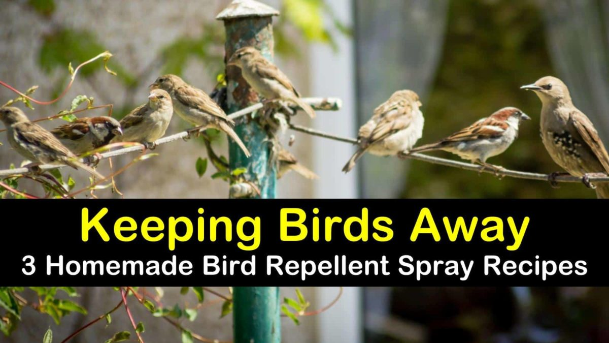Keeping Birds Away 3 Homemade Bird Repellent Spray Recipes