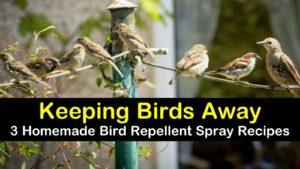 homemade bird repellent spray titleimg1