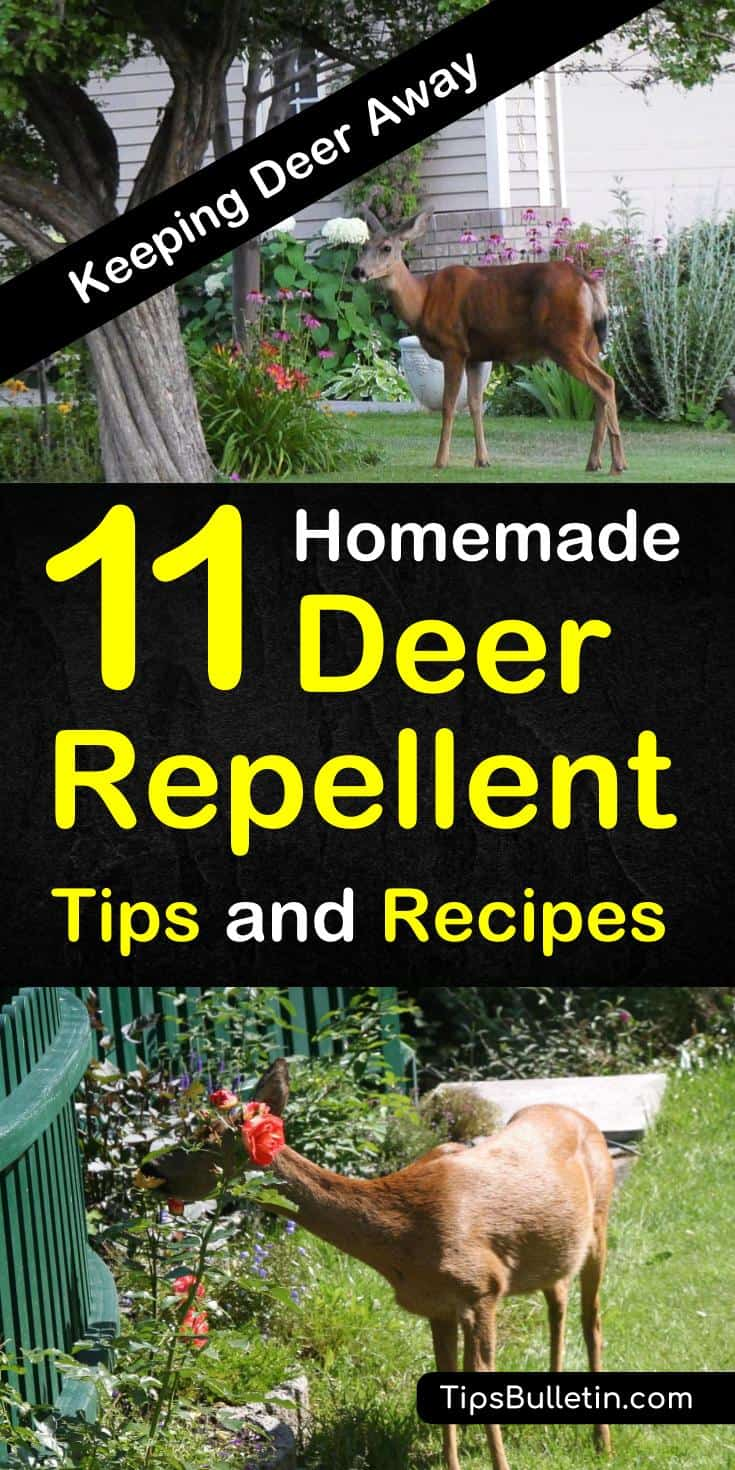 Learn how to make homemade, natural deer repellent. Keep deer out of your garden and from eating your plants, flowers and fruit trees, with these simple tips and recipes for keeping deer out of your yard. #deerbegone #deerrepellent #getridofdeer