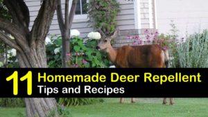 homemade deer repellent titleimg1
