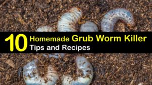 homemade grub worm killer titleimg1