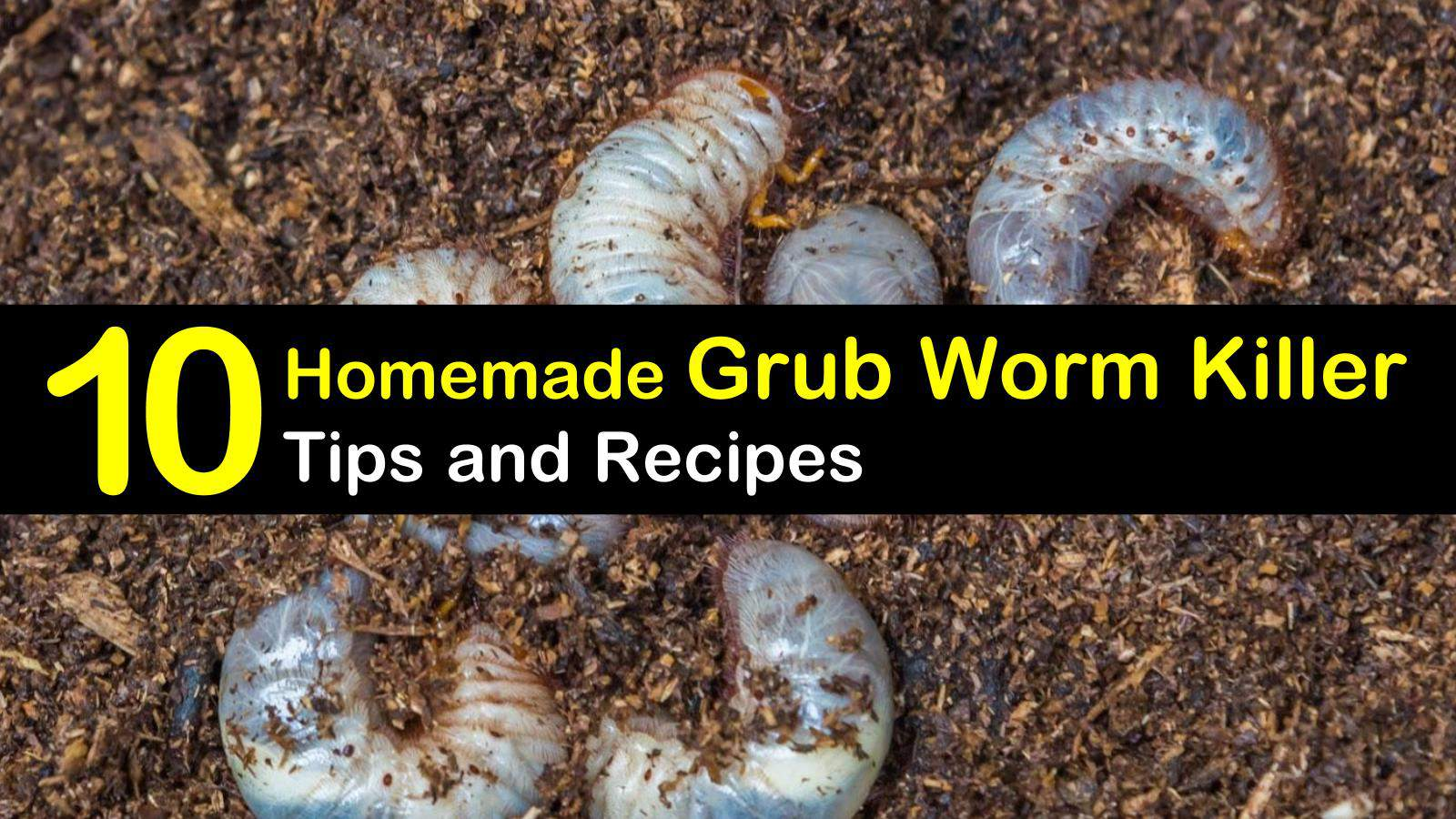 Killing Grub Worms Naturally - 10 Homemade Grub Worm Killer Tips and ...