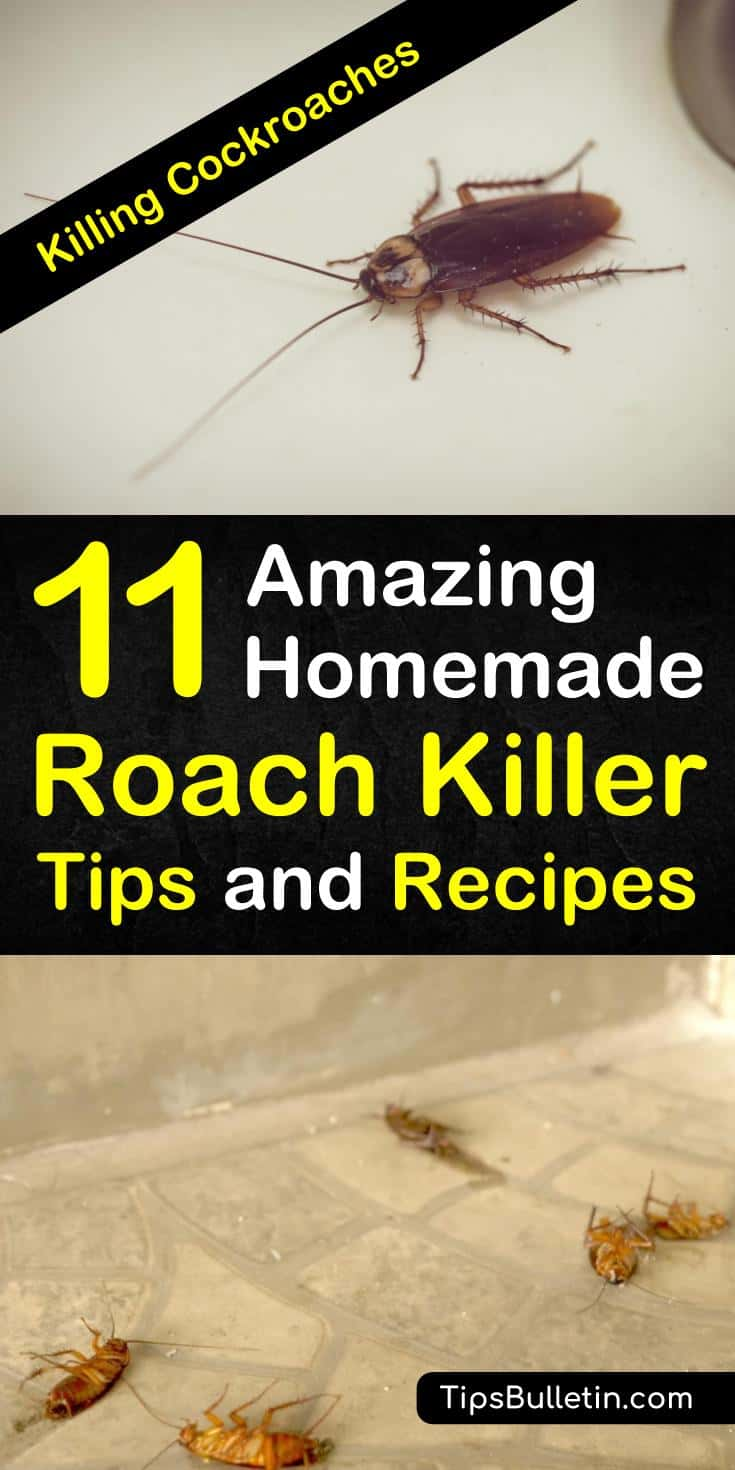 Discover amazing DIY cockroach repellent recipes and home remedies for killing roaches. Learn how to use simple ingredients, like sugar, baking soda, and bay leaves to create roach spray and traps that kill cockroaches. #killcockroaches #roachrepellent #getridofroaches