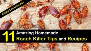 homemade roach killer titleimg1