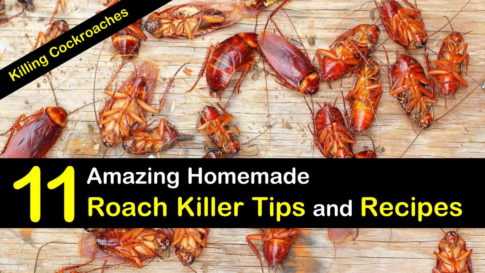 homemade roach killer titleimg1