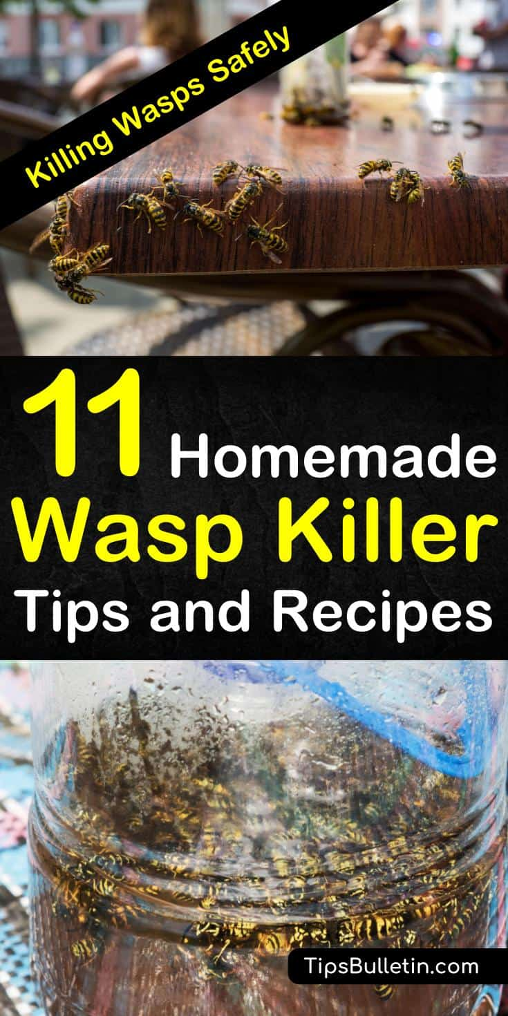 Want to know how to get rid of wasps, including yellow jackets, from around your house if a water spray isn't doing the job? If you're looking for environment-friendly home remedies, check out our 11 homemade wasp killer tips and recipes: #wasps #homemade #waspspray #waspkillers #insecticides