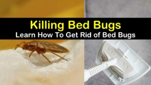 how to get rid of bed bugs titleimg1