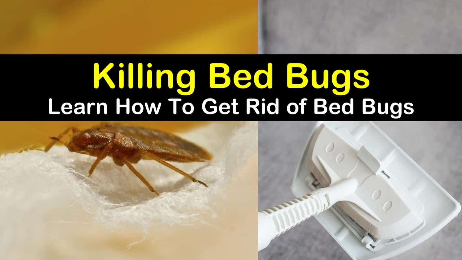 22 Highly Effective Ways To Get Rid Of Bed Bugs