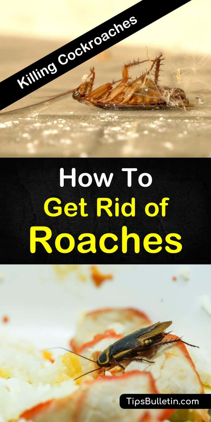 Learn how to get rid of cockroaches and keep infestations away for good! With home remedies that you can safely use in the house and in the kitchen, these roach killing solutions with keep your home pest-free. #diyroachkillers #homeremedies #cockroaches