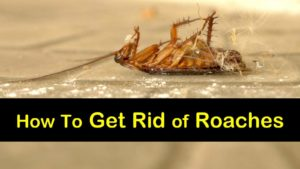 how to get rid of roaches titleimg1
