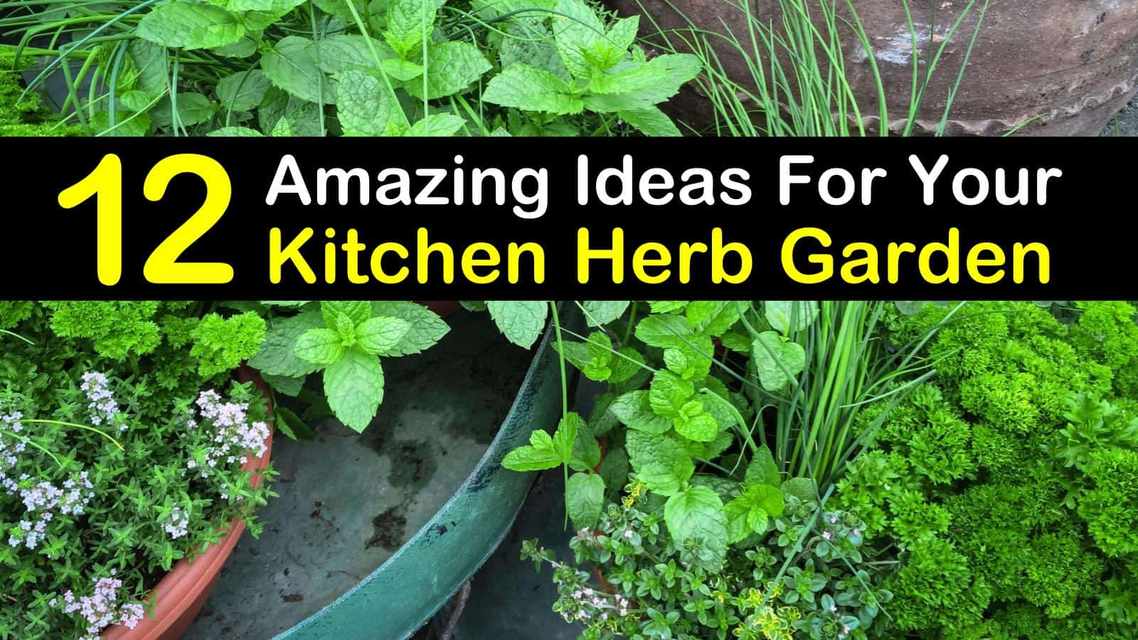 kitchen herb garden titleimg1