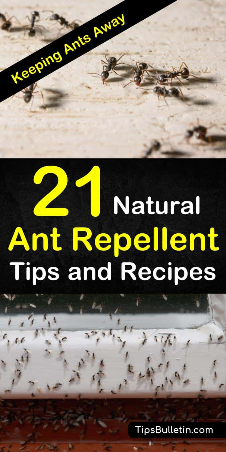 Say goodbye to ants for good with these natural ant repellent tips and recipes. Look through the many tricks that will make ant infestations a thing of the past. Keep a happy, healthy home without pesticides. #getridofants #antrepellent #antspray