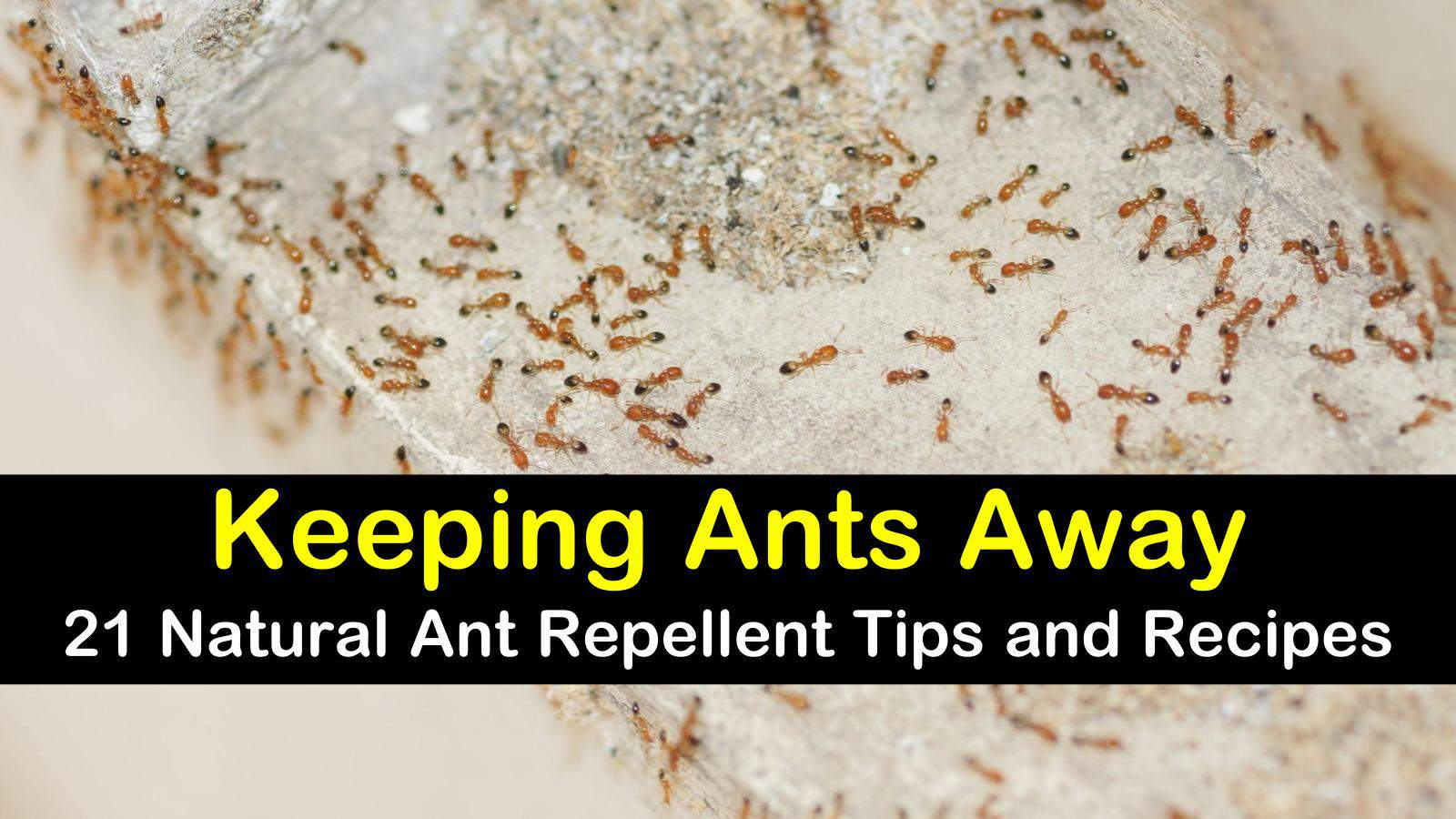 natural ant repellent titleimg1