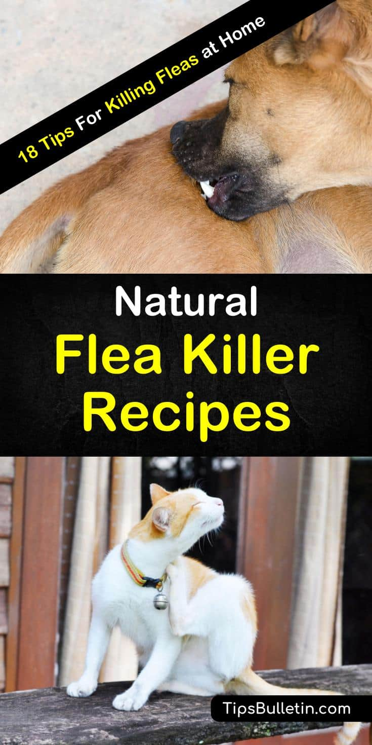 Learn how to make natural flea killers to help out your cats and dogs and make your life easier. It is easy to get rid of fleas and bed bugs with a simple, homemade spray. #fleakiller #naturalfleakiller #howtomake