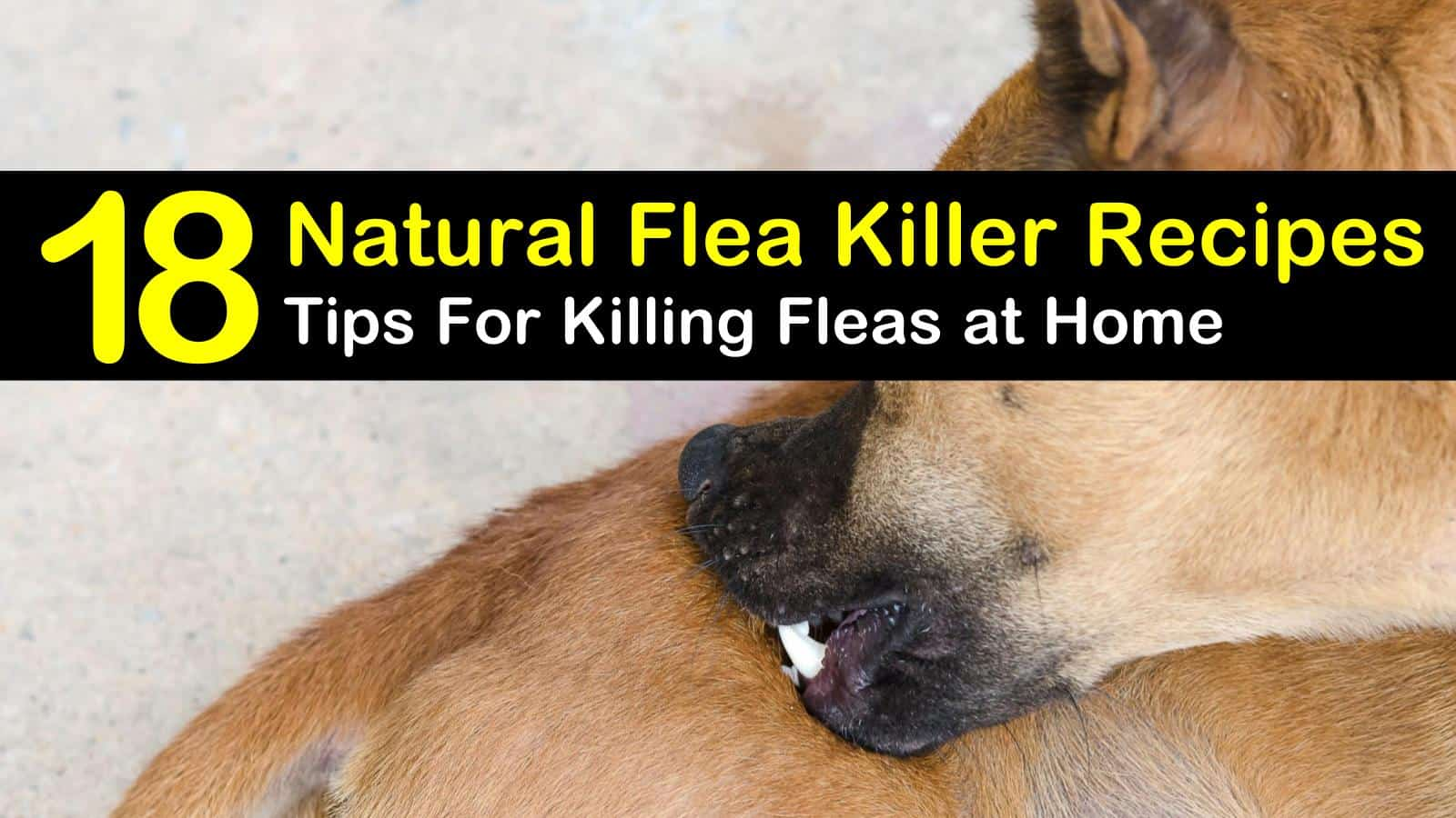 18 Clever DIY Flea Killer Recipes