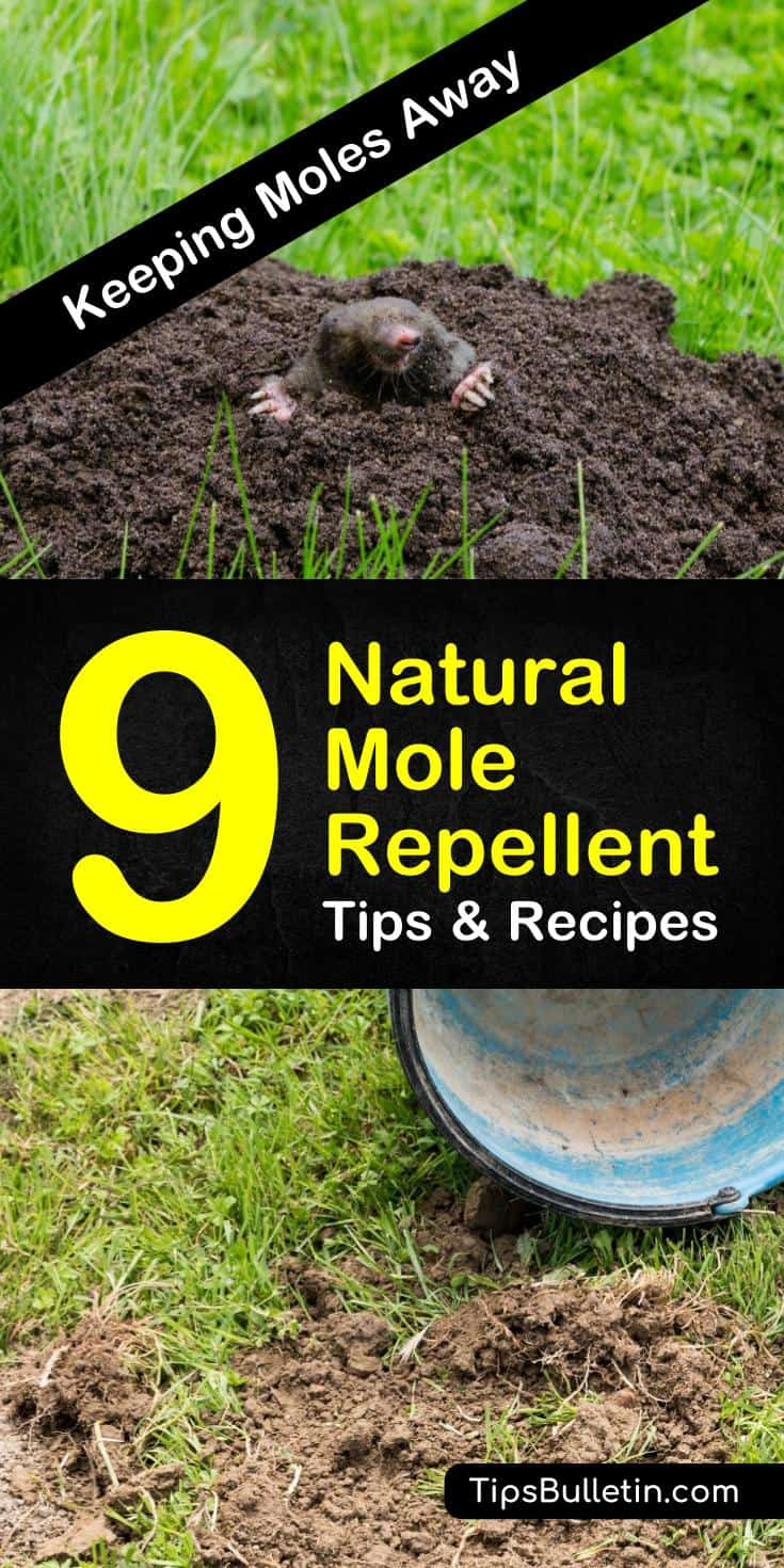 Useful Tips To Make Your Everyday Life Just A Bit BetterPest control doesn't have to involve harsh chemicals that will ruin your plants. Natural mole repellent methods, including castor oil, effectively eliminate moles and other burrowing pests. #pestcontrol #getridofmoles #molecontrol #moles