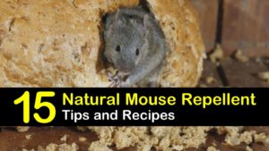 natural mouse repellent titleimg1