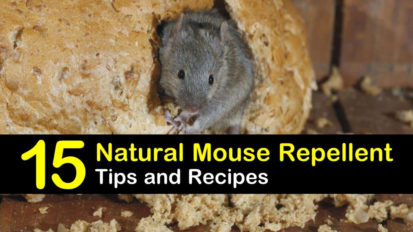 15 Brilliant DIY Mouse Repellents