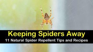 natural spider repellent titleimg1
