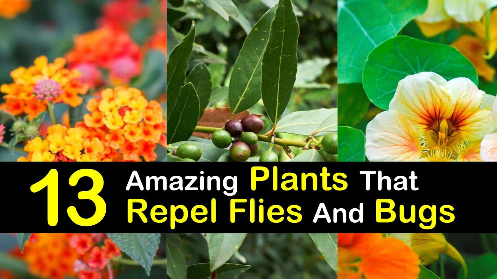 plants that repel flies titleimg1