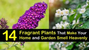 plants that smell good titleimg1