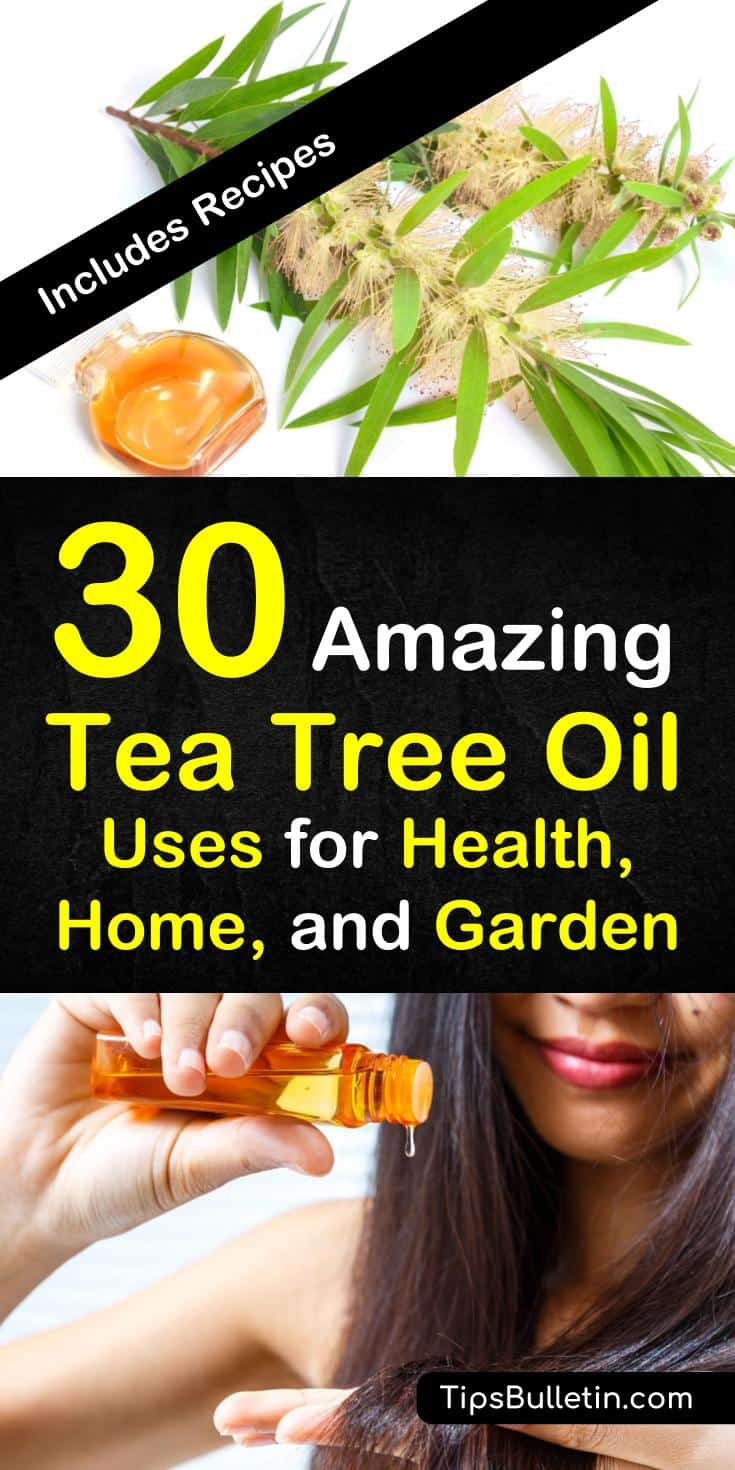 Tea tree oil, a derivative of the Melaleuca alternifolia tree from Australia, has amazing antiseptic and antibacterial properties. Learn how to use tea tree oil for your health, home, and garden. #teatreeoil #essentialoils