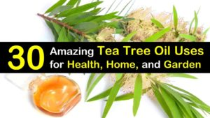 tea tree oil uses titleimg1