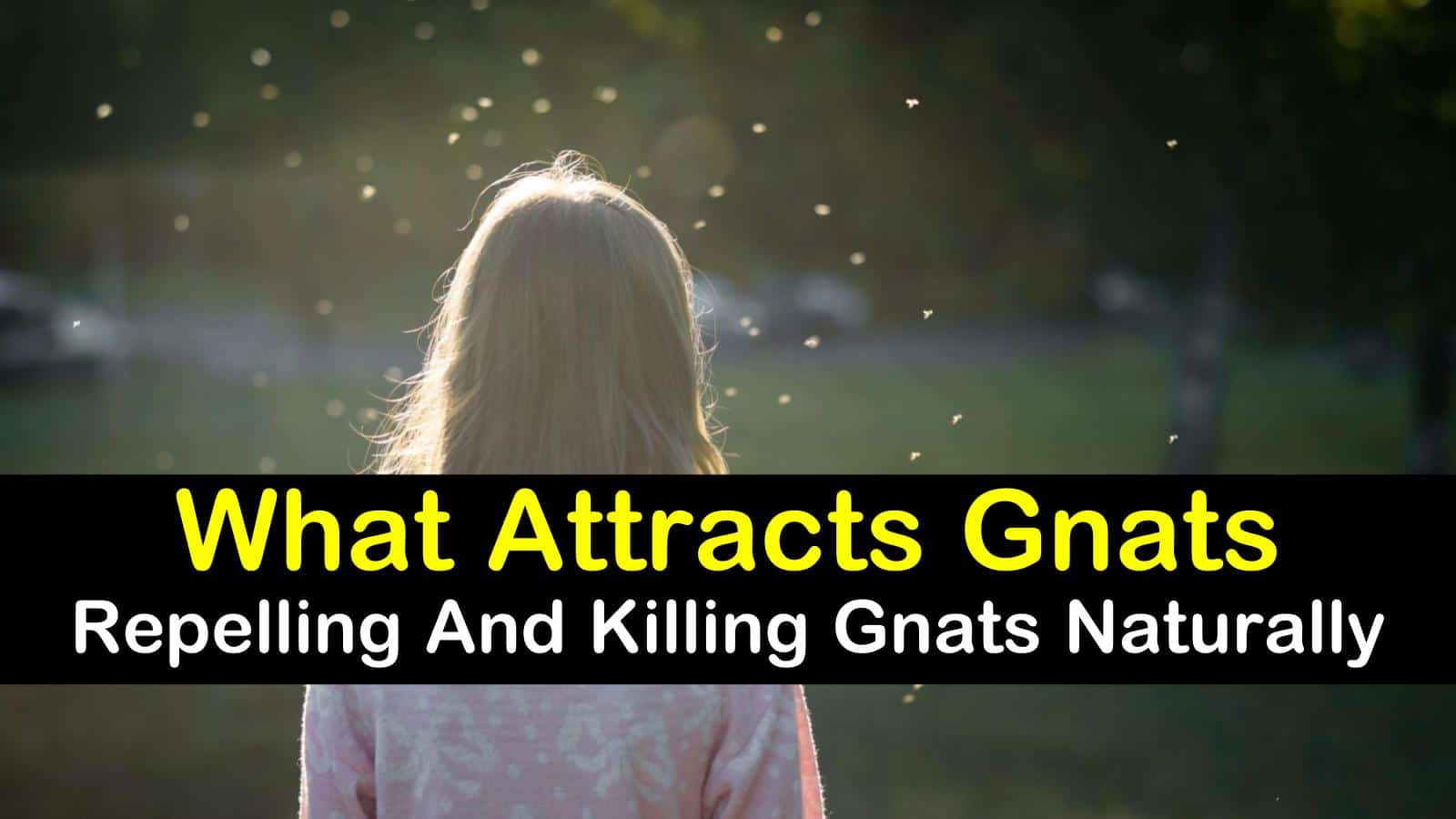 what attracts gnats titleimg1
