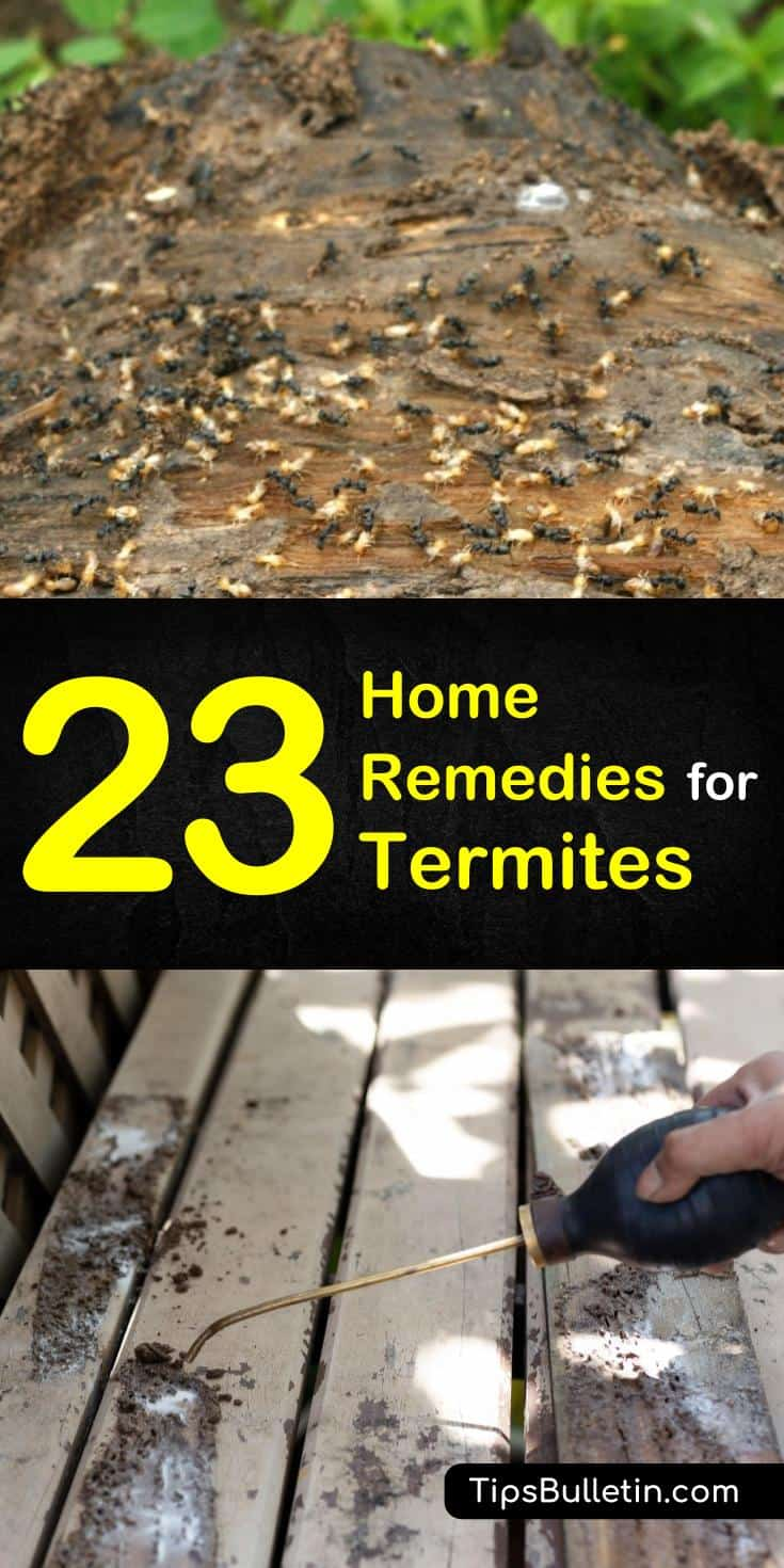 Learn how to get rid of termites and how to combat a termite problem in your home with these home remedies for termites. These tips and tricks use ingredients and items you may already have at home and will help make pest control easier. #termite #pestcontrol #termitekiller