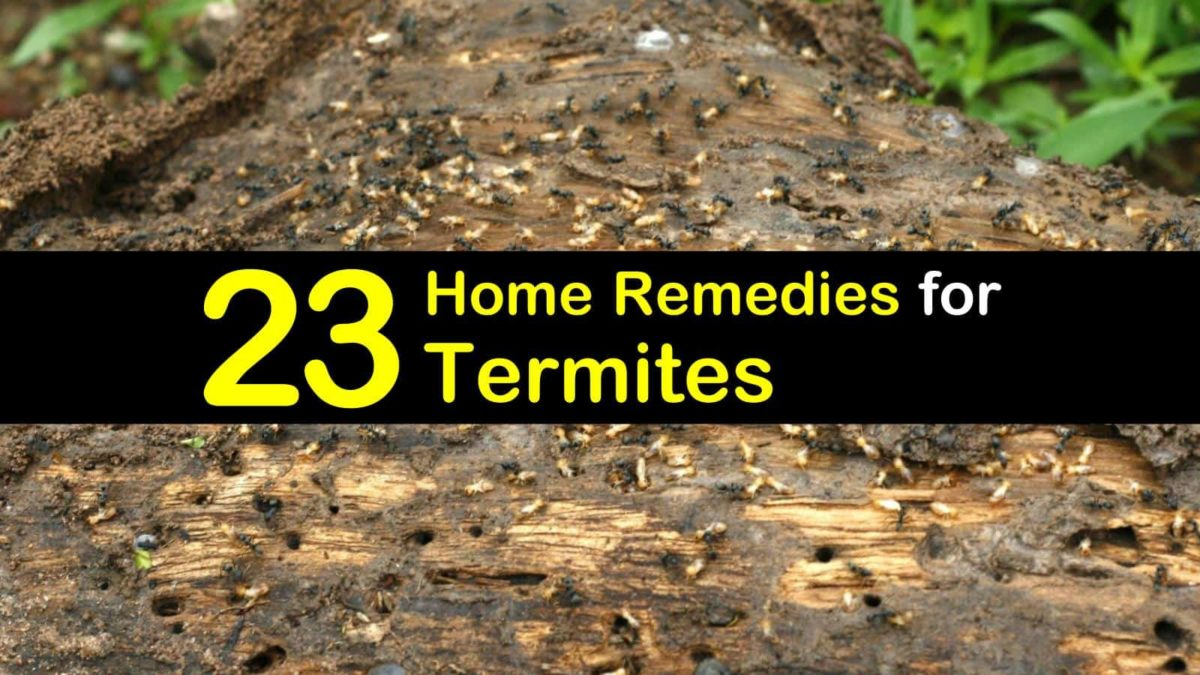 23 Simple Remes For Termites