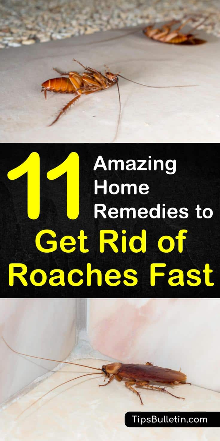 Learn the best home remedies to get rid of roaches fast with essential oils and vinegar in your apartment or in the house. Discover 11 DIY home remedies for killing roaches and insects naturally with borax. #killroaches #diy #roachtraps #cockroach