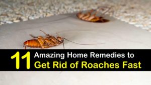 home remedies to get rid of roaches fast titleimg1