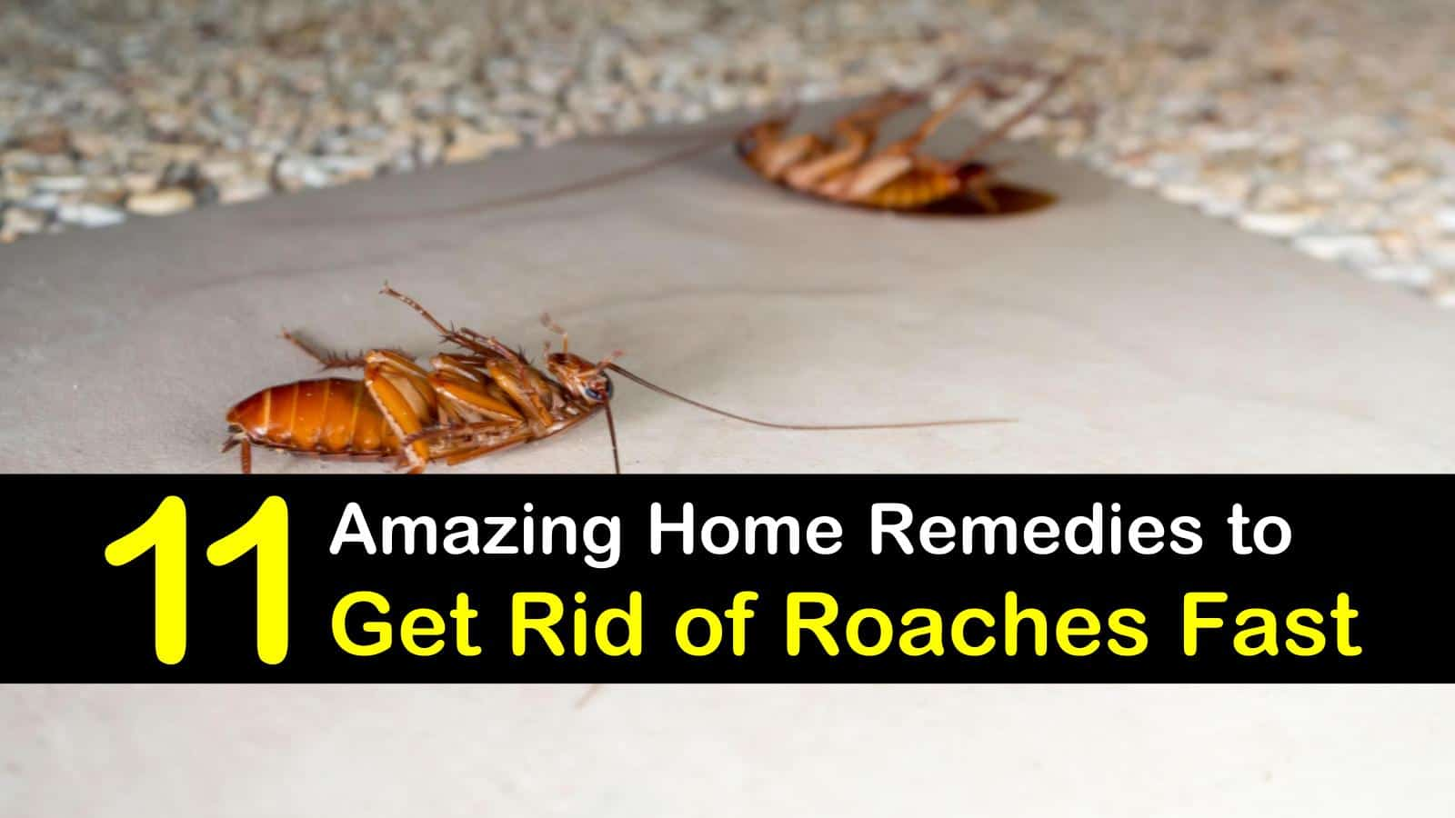 Swell Household Pest Control Recipes 11 Amazing Home Remedies To Home Remodeling Inspirations Basidirectenergyitoicom