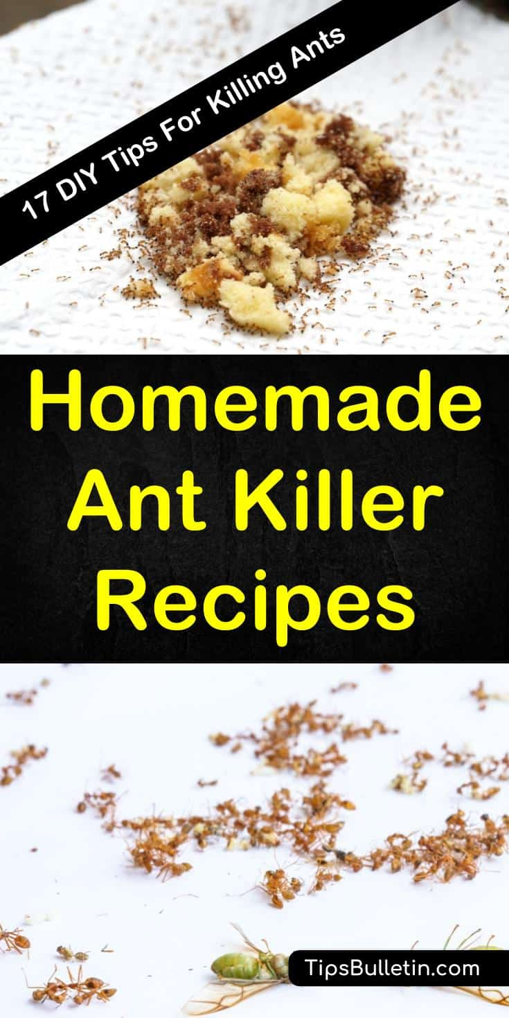 Learn about homemade ant killing recipes for inside and outside your home. Find easy ingredients