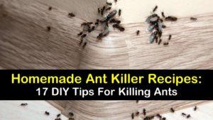 homemade ant killer titleimg1