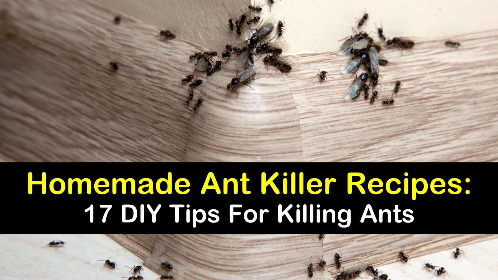 17 DIY Ant Killer Recipes for Indoors & Out