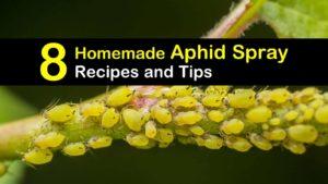 homemade aphid spray titleimg1