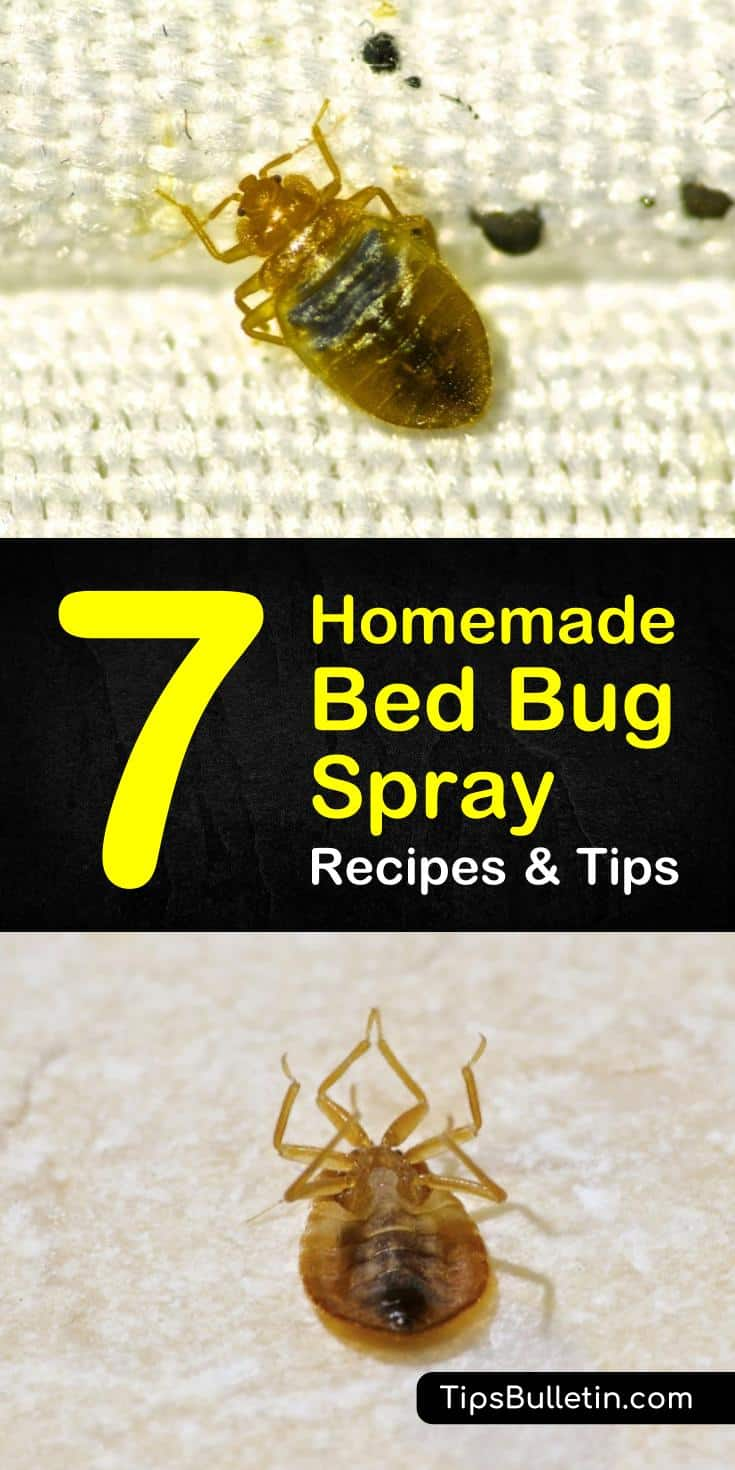 Find out how to use pest control tactics to create a homemade, diy, all-natural bed bug spray. Combine ingredients like essential oils and alcohol to kill the young living bed bugs in your bedrooms and your guest bedrooms. #bedbugs #homemadespray