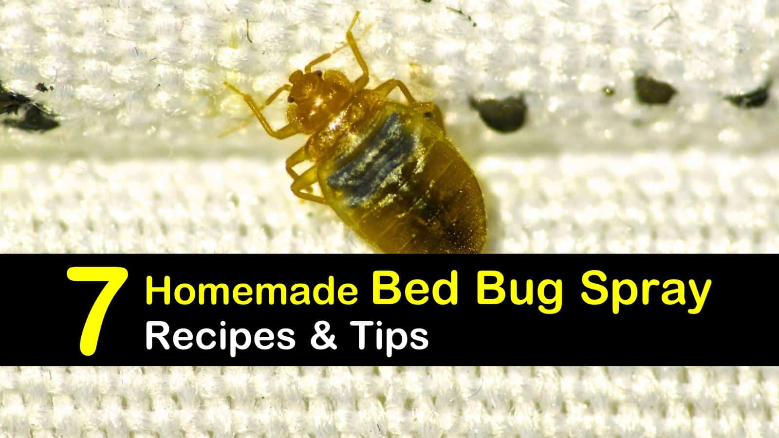 Getting Rid Of Bed Bugs 7 Homemade Bed Bug Spray Recipes