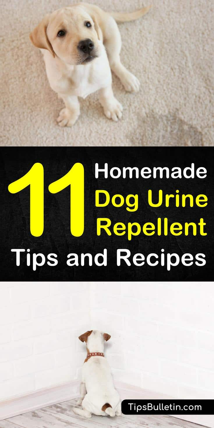 Keeping Dogs Away 11 Homemade Dog Urine Repellent Tips